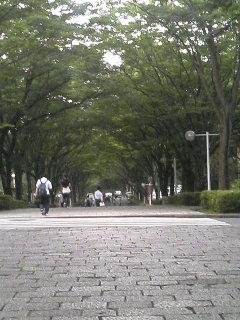 栄光の道1